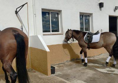 lavado-caballo
